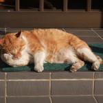 小町通りの看板猫。